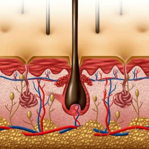 Damaged Hair Follicles - Causes, Symptoms & Treatment Options